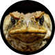 Dtoad's Avatar